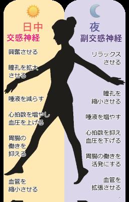 自律神経のバランス★埼玉中医薬研究会