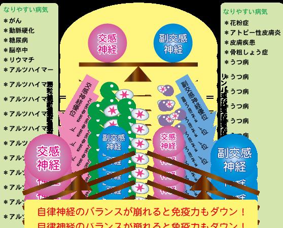 免疫システムのバランス★埼玉中医薬研究会